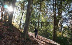 Walking in Fernbank Forest, Atlanta.