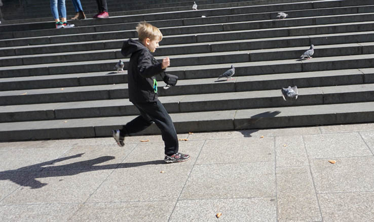 Boy chases pigeons on the steps of St. Paul's Cathedral, London
